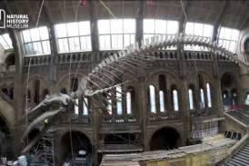 """Galleria """"Andiamo per musei"""", il nuovo progetto digitale alla scoperta di arte e cultura"""